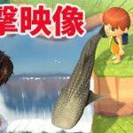 【あつ森】ジンベイザメを二段滝から落下させると大変なことが起こった【あつまれどうぶつの森】