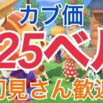 【あつ森】ライブ参加型 カブ価625ベル島 雑談