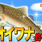 【あつ森】魚影バグ?歩く魚「オオイワナ」を釣る方法 ~Char~【あつまれ どうぶつの森】
