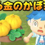 【あつ森】光る金の穴にかぼちゃの苗植えたら金のかぼちゃ出来るんじゃね?【あつまれどうぶつの森検証】