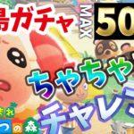 (生放送)  離島ガチャちゃちゃまるチャレンジ50連【あつ森】