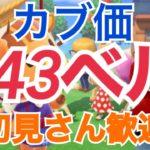 【あつ森】ライブ参加型 カブ価643ベルや635ベルなど かぶ手数料なし