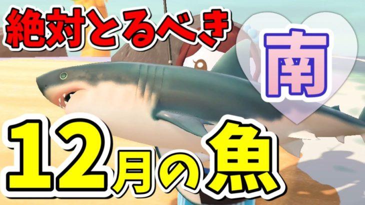 の あつ 方 サメ 森 釣り