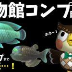 【あつ森】博物館コンプ目指す配信!魚コンプまであと二匹…!!!!【あつまれどうぶつの森】