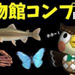 【あつ森】博物館コンプ目指す配信!魚を釣りまくるでぇぇぇぇぇ!!!!【あつまれどうぶつの森】